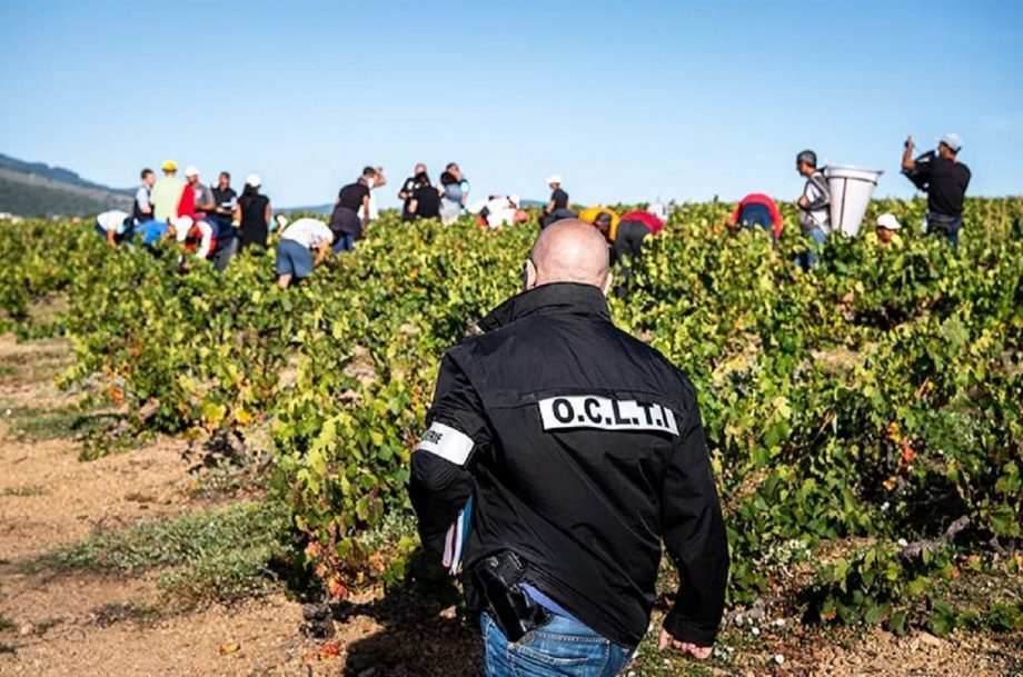 vineyard worker trafficking