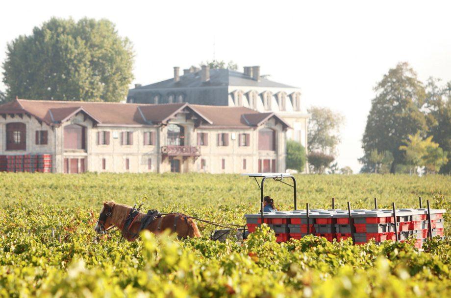 Bordeaux natural wine