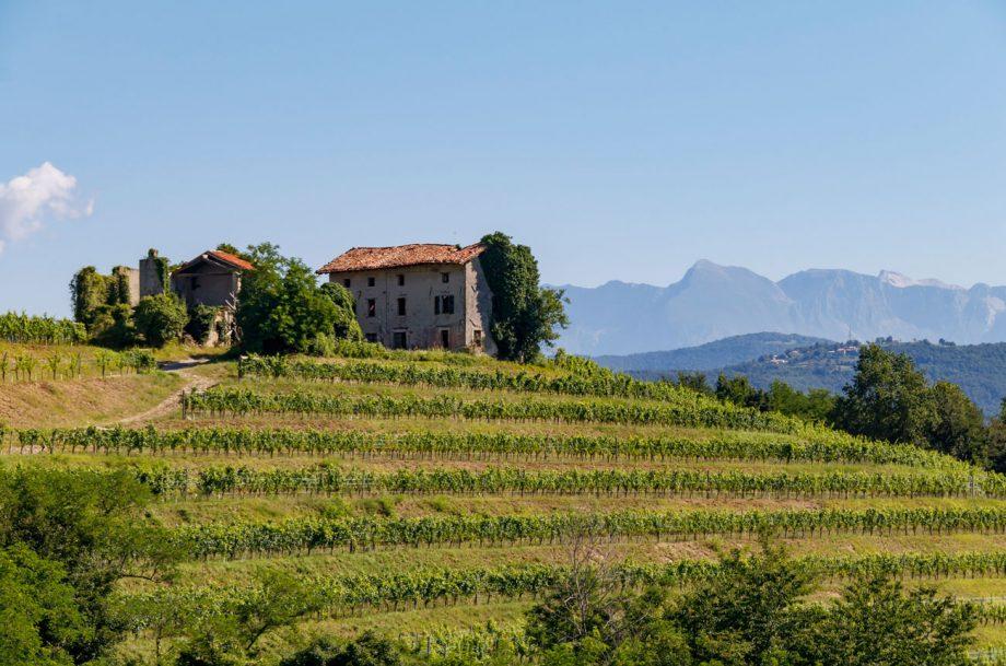 Friuli-Venezia Giulia wine region