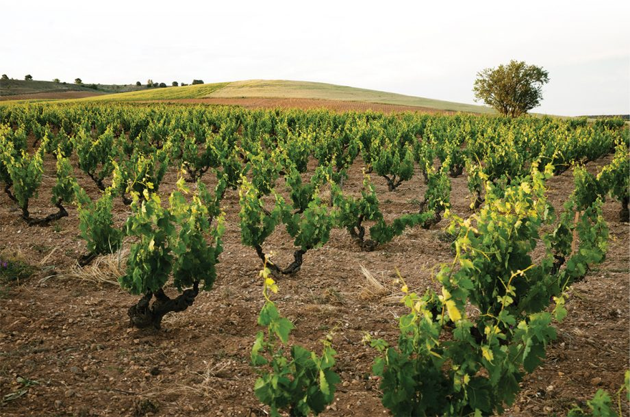 Ribera del Duero red wines vineyards