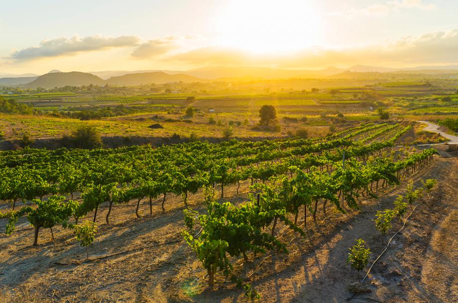 Valencia wines