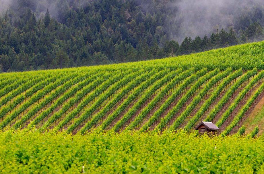 Jackson family wines balo