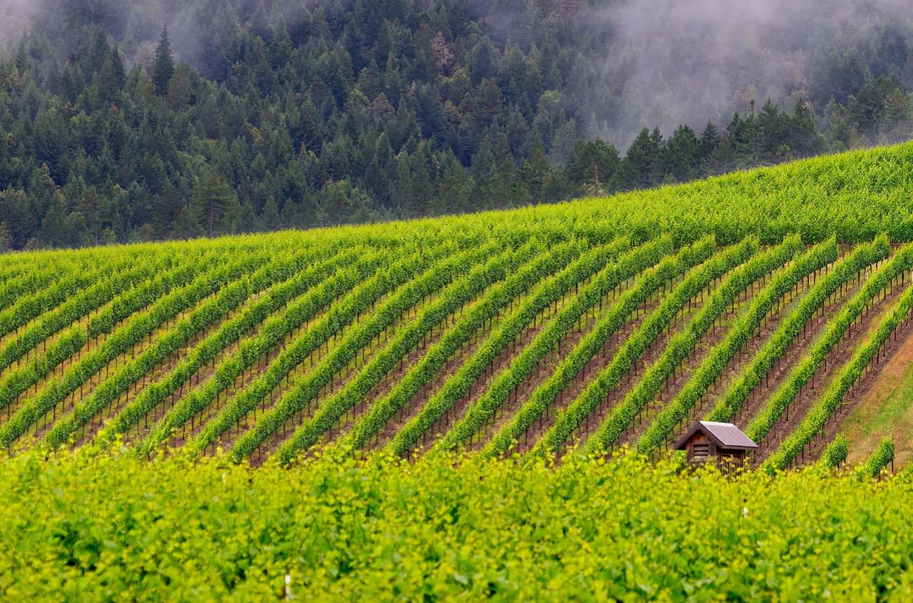 Jackson Family Wines buys Balo winery in Anderson Valley - Decanter