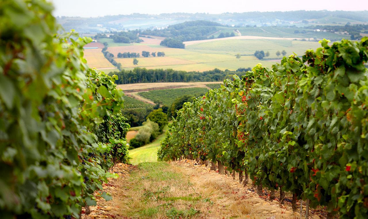 Madiran regional profile plus top 10 wines worth seeking out - Decanter