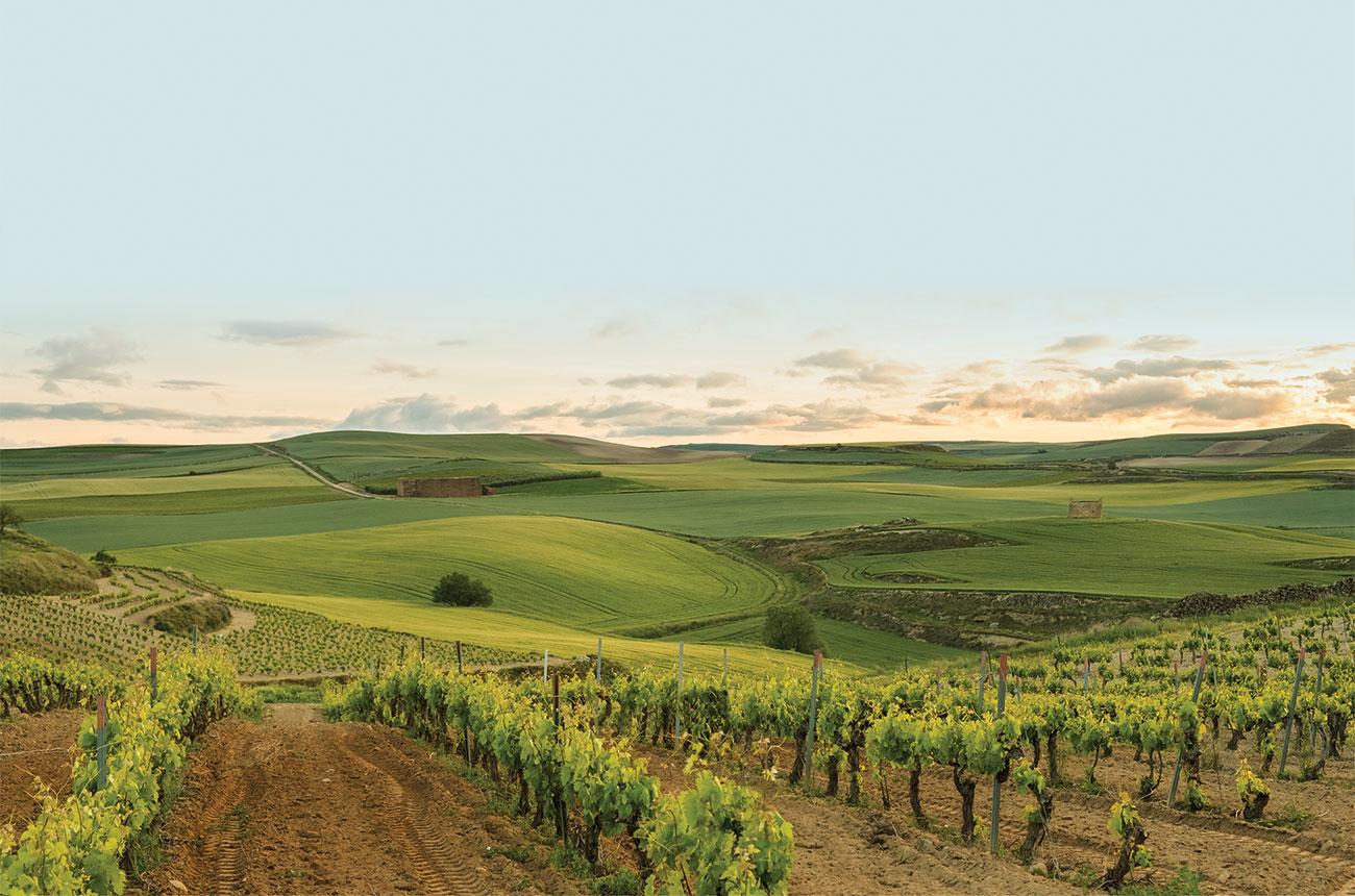 Ramón Bilbao: The sustainable way to wine
