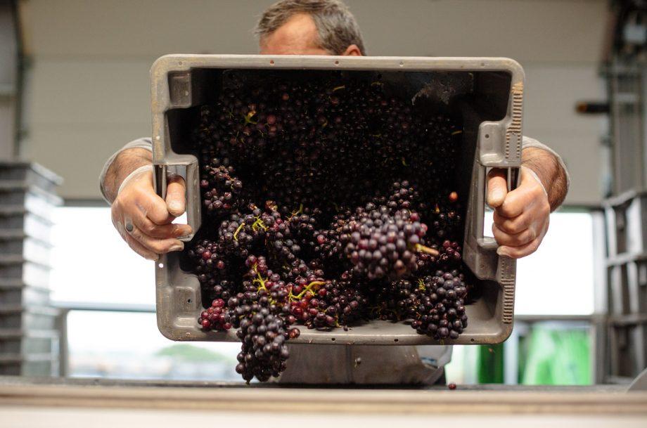English wine report