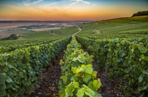 Champagne 2018 vintage report