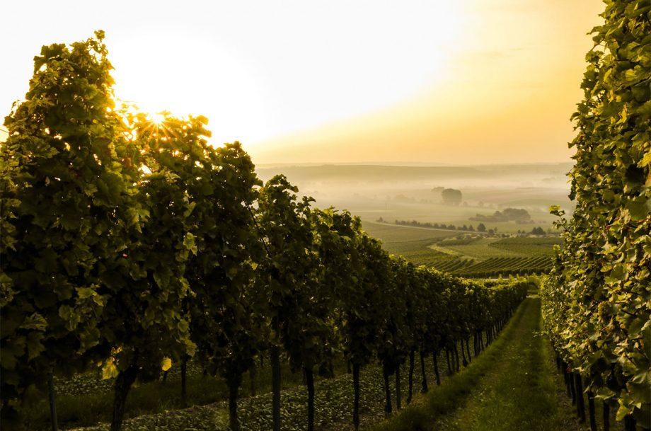 wine climate change 2020