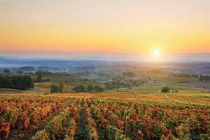 Burgundy climate change