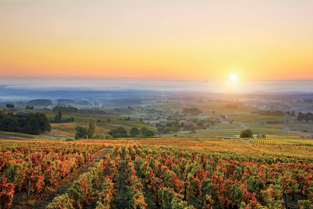 Climate change in Burgundy: Slowing the impact - Decanter