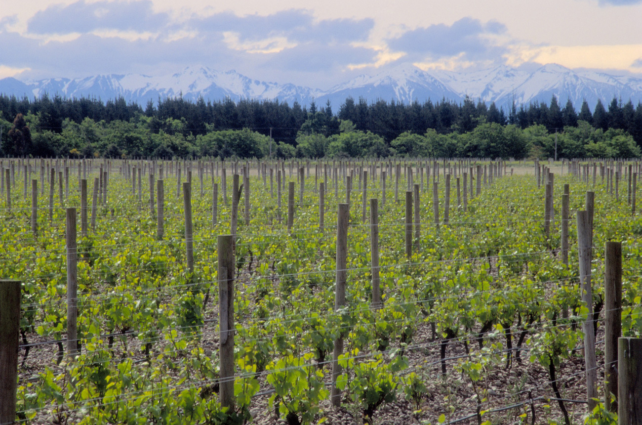 New Zealand wine: Beyond Sauvignon Blanc and Pinot Noir - Decanter