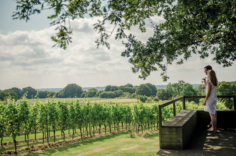 Gusbourne vineyards