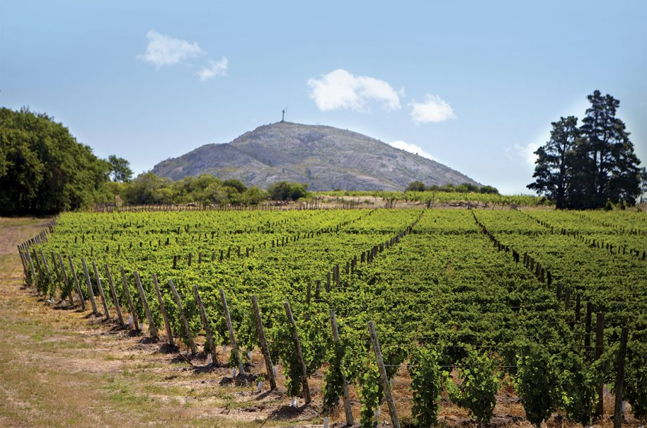 Bodega Bouza vineyards