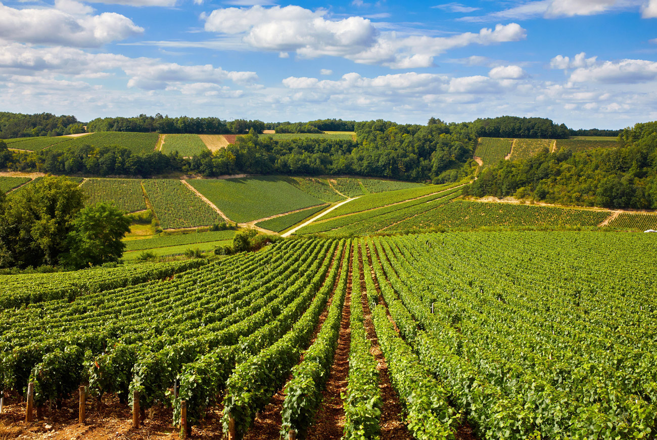 At the forefront of change: Joseph Drouhin & Albert Bichot plus 8 top wines - Decanter