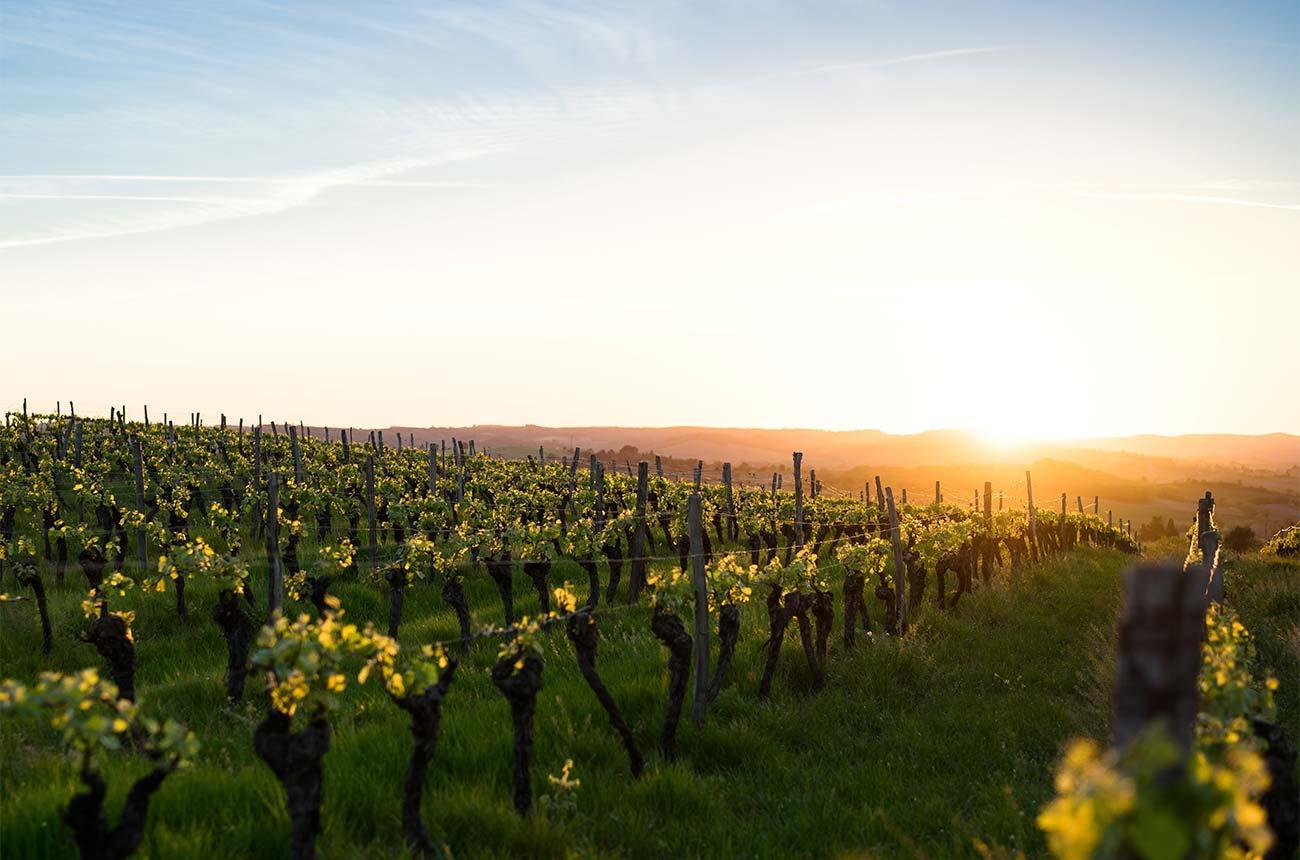 Iberian red varieties in Australia: Top wines to try - Decanter