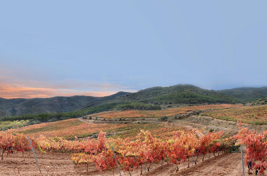 La Pasada vineyard, Rioja Oriental