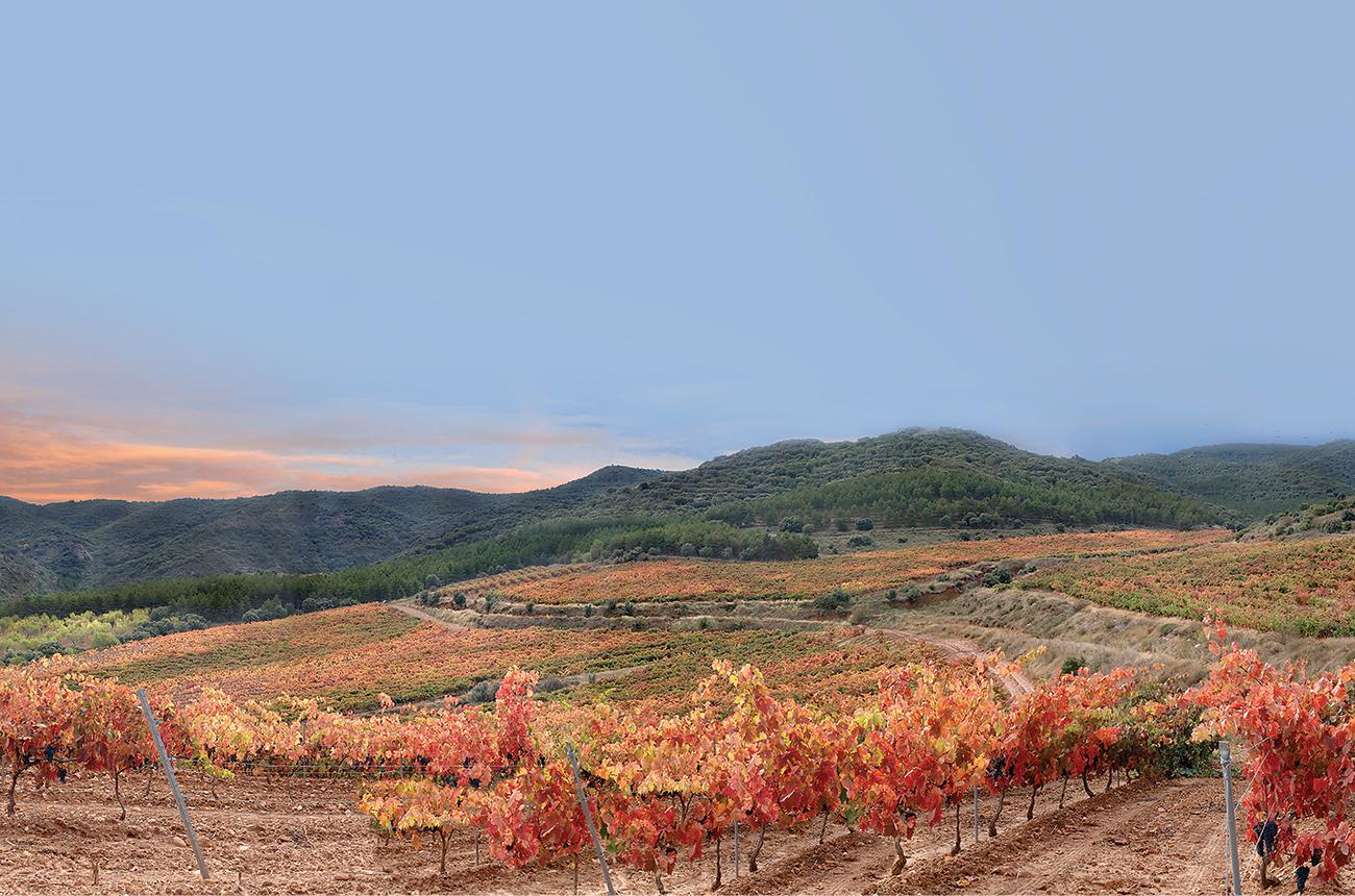 Regional profile: Rioja Oriental - Decanter
