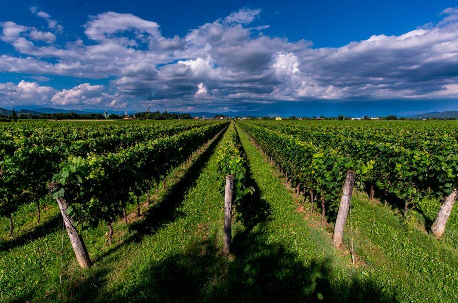 Masut da Rive vineyard