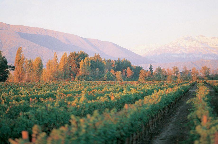 Puente Alto vineyard