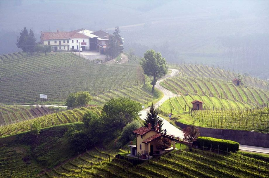 Piedmont fine wine