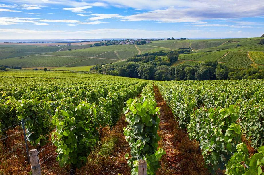 chablis in burgundy