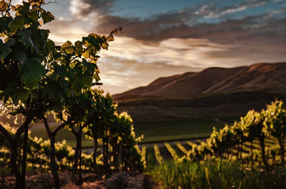 New Zealand organic wine