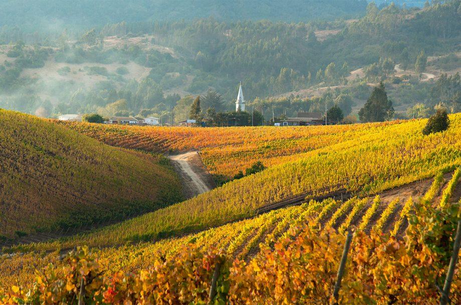 Casa Marin vineyards