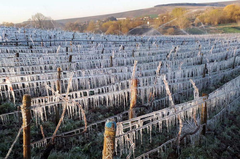 Frost Burgundy 2020