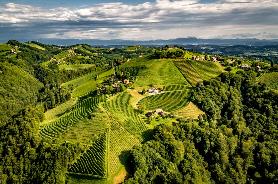 Austrian Wine vineyards
