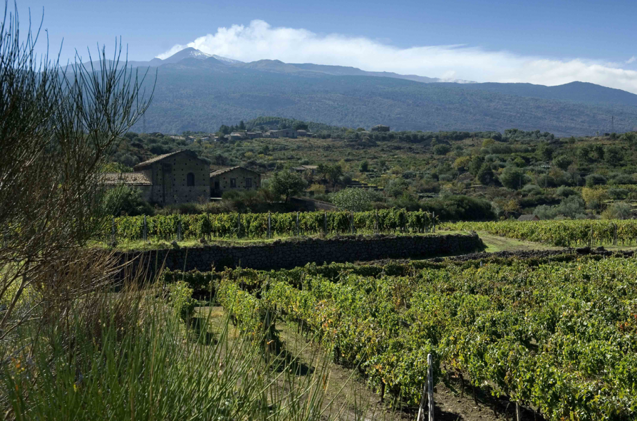 Southern Italy wines
