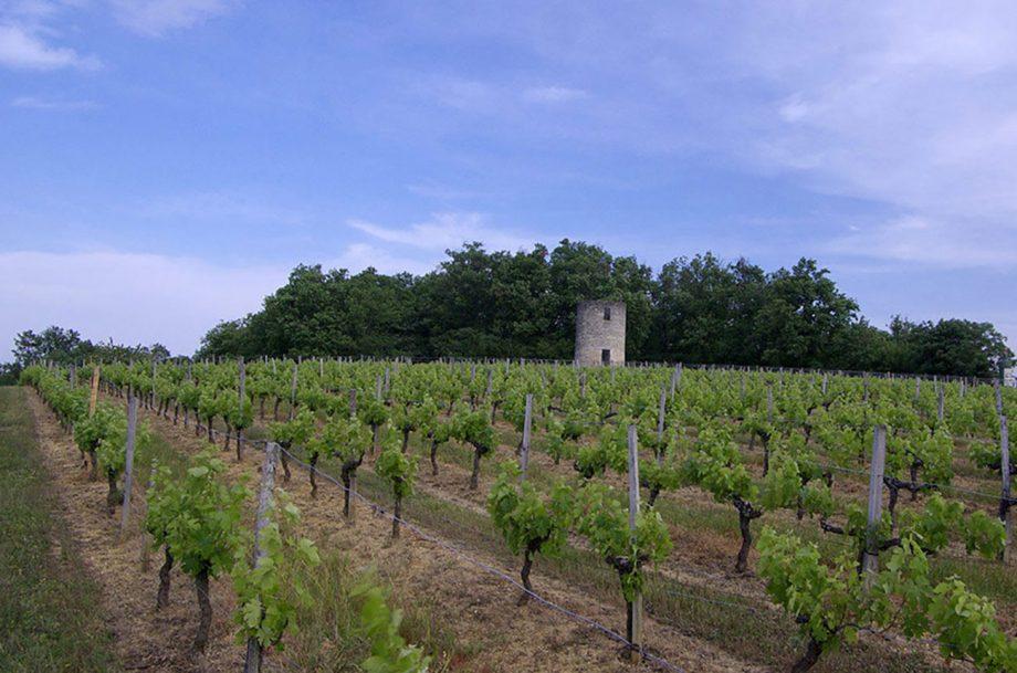 Bordeaux second grapes