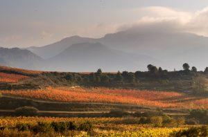 Sierra de Cantabria Ramon Bilbao Vineyards