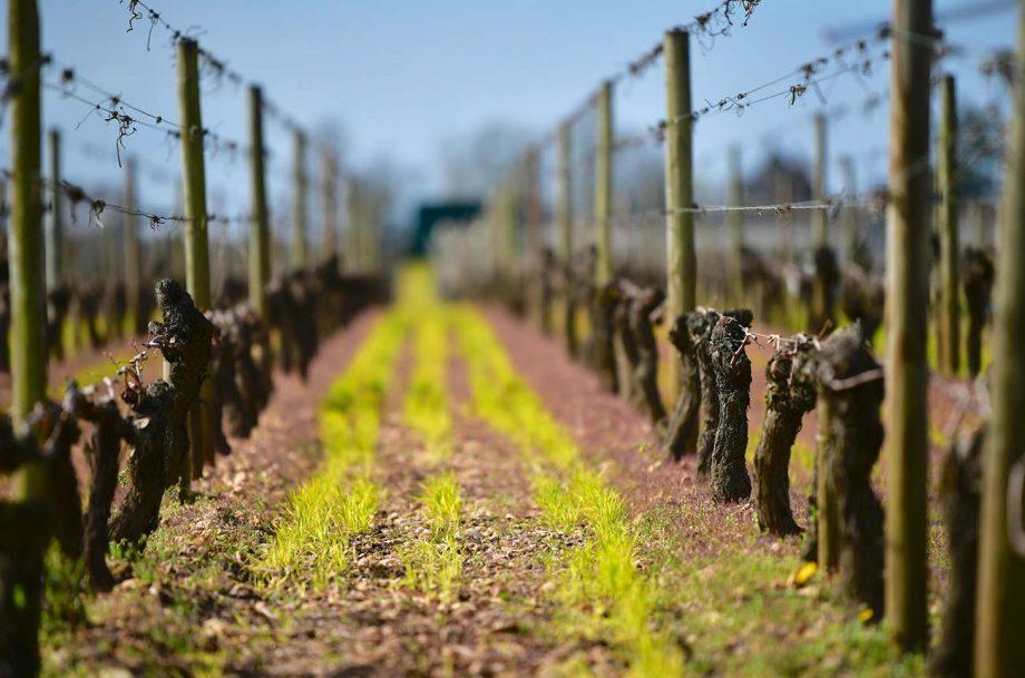 Bordeaux 2019 wines