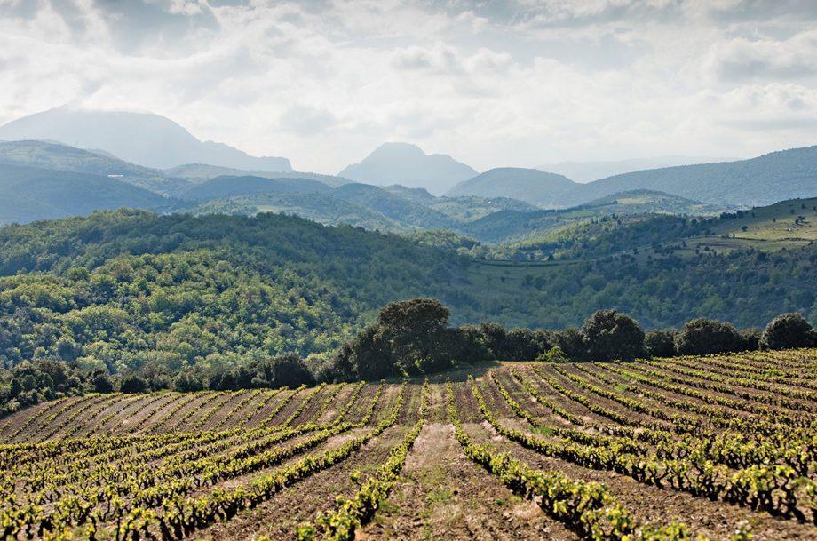 Le Soula vineyards, Pays d'Oc wines