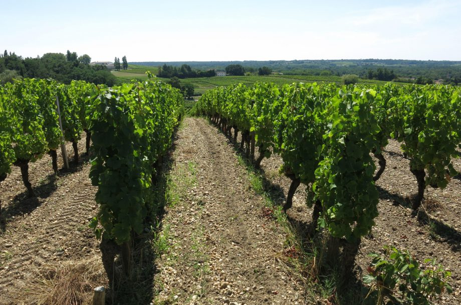 Vineyard, Sauternes, France