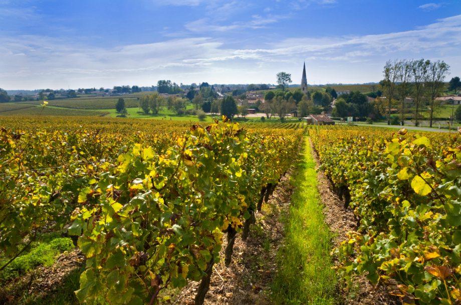 Sauternes 2019 wines