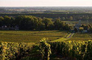 Sauternes and Loupiac vineyards