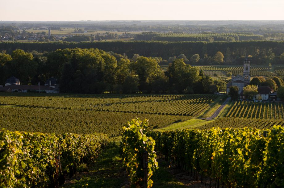 Sauternes and Loupiac vineyards