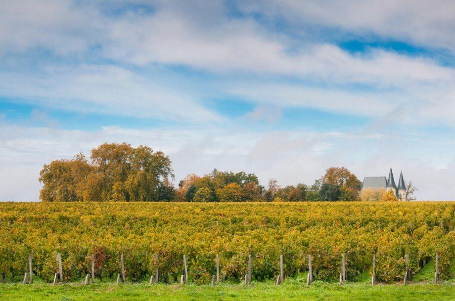 St Julien 2019 wines