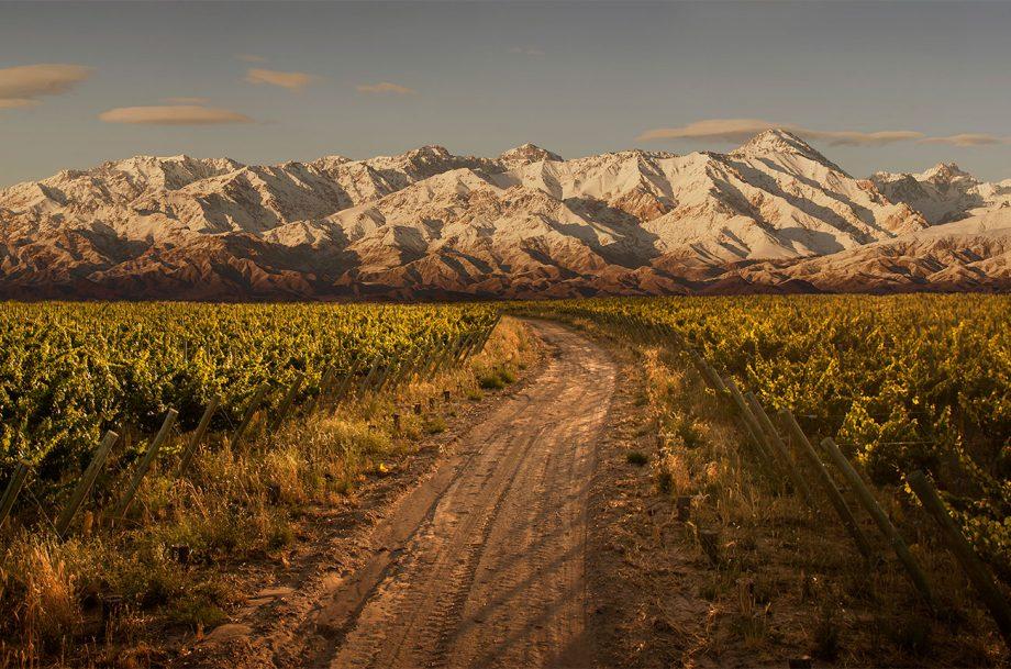 Trapiche vineyard