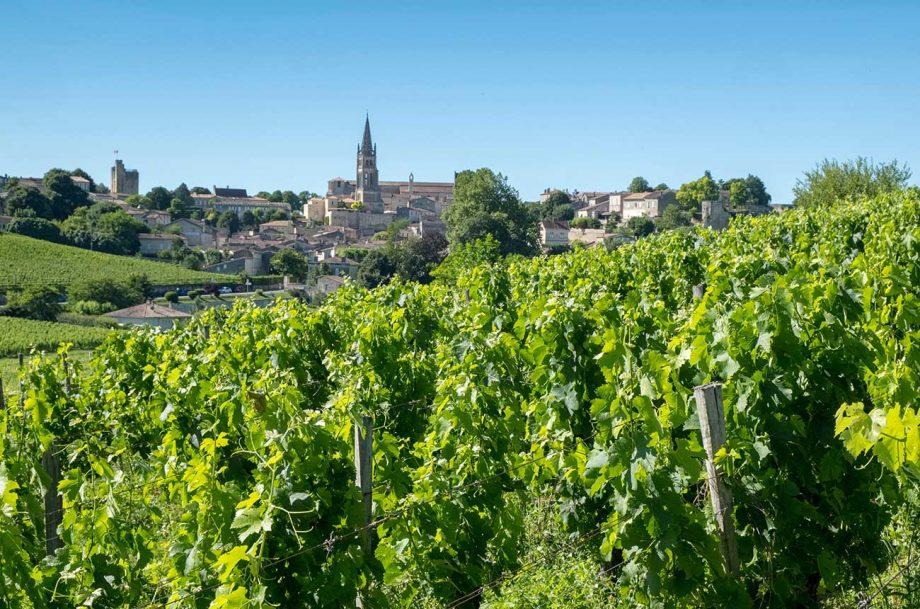 hobby vineyards, bordeaux