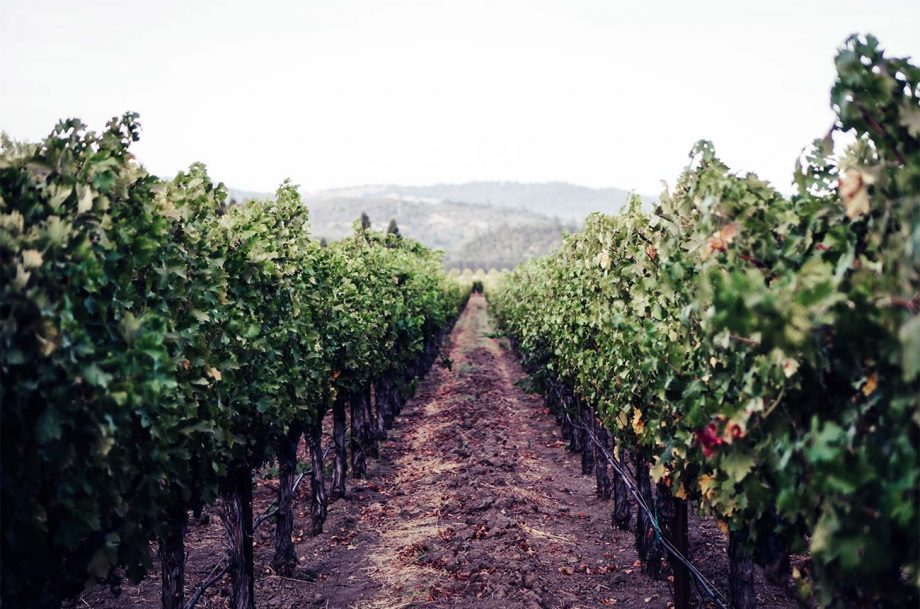 reopened Napa wineries