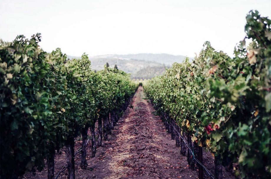 Napa fine wine market
