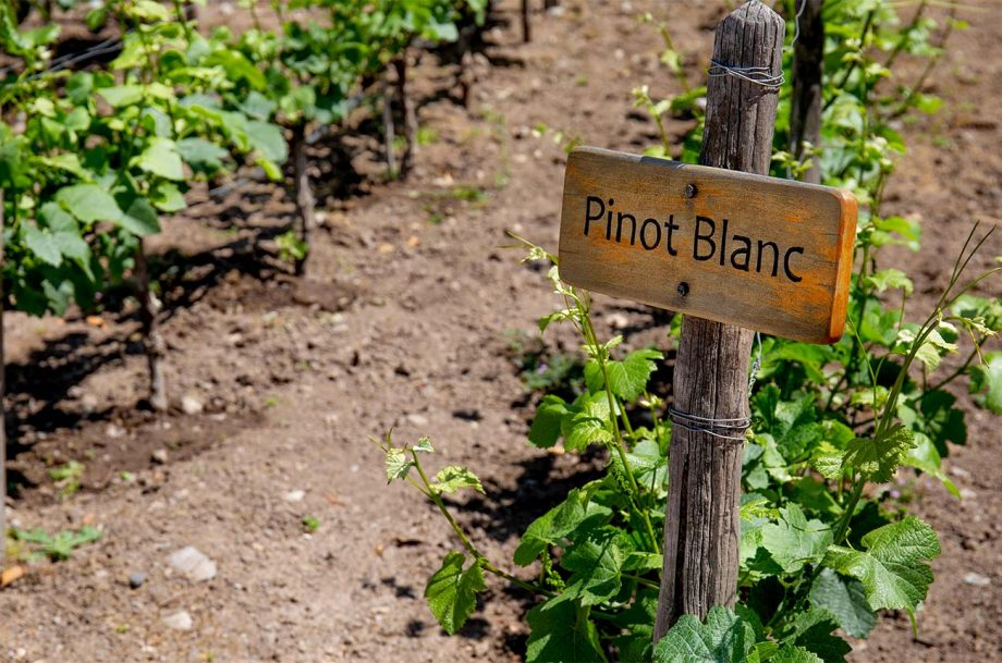 Auxerrois Pinot Blanc