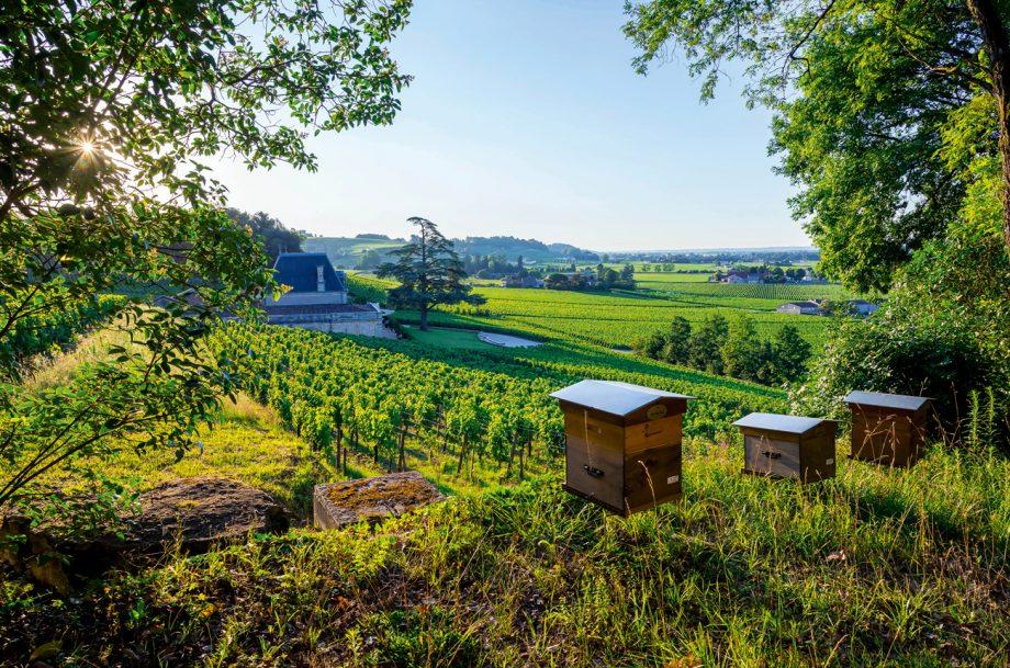 Beehives at Château Fonplégade;, new Bordeaux producers
