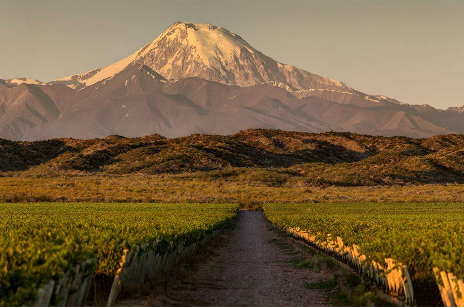 Cruz del Alto vineyard