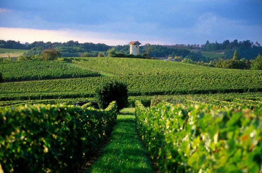 value Bordeaux white wines, Entre Deux Mers vineyards
