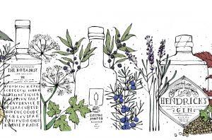 Gin illustration, gin botanicals