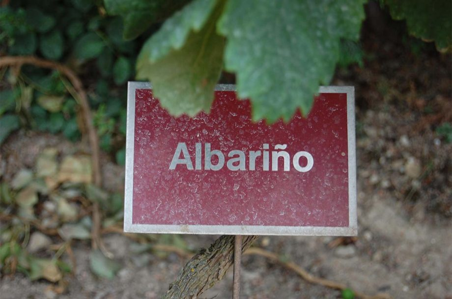 albarino origins