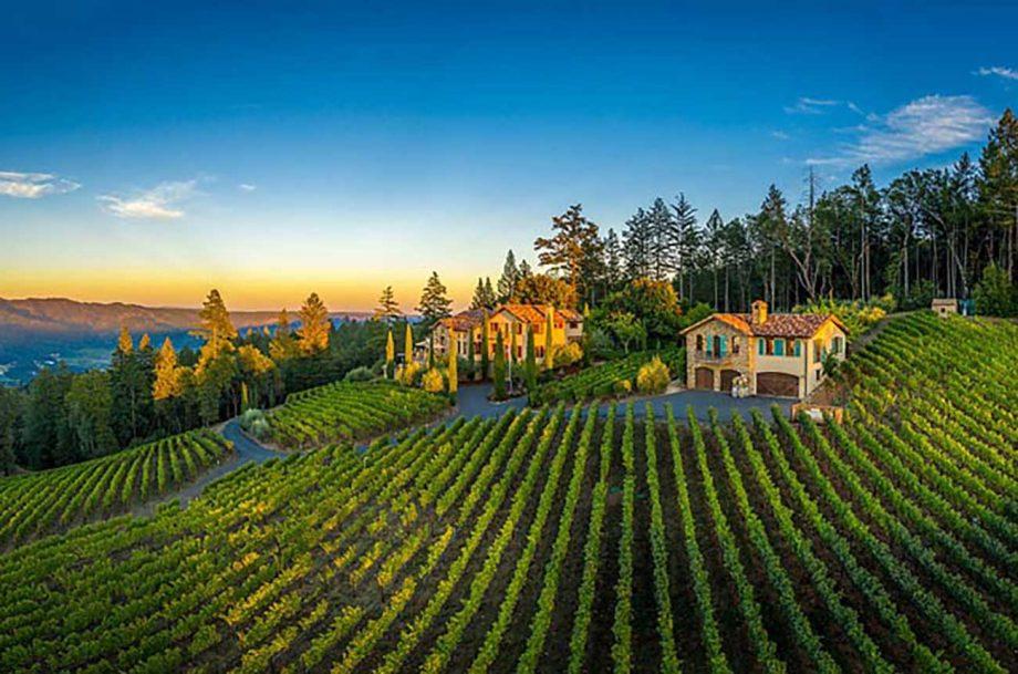 California vineyard, diamond mountain